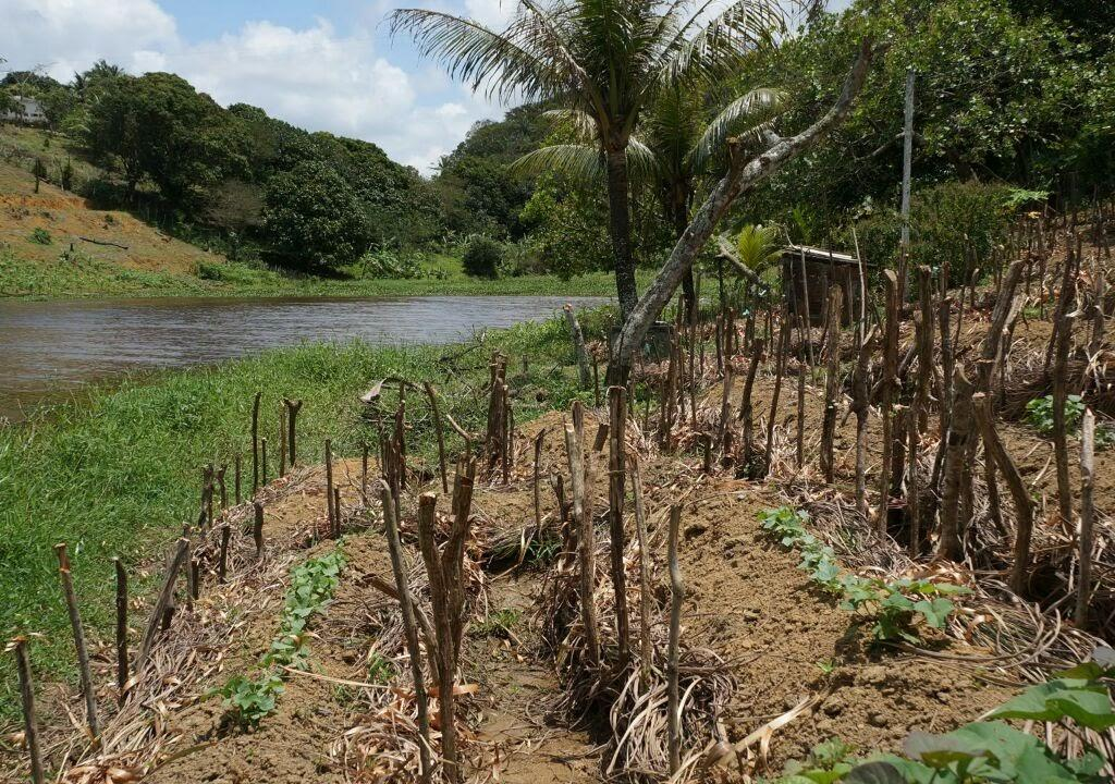 Eco Program in Brazil: Permaculture in Brazil: experience a
